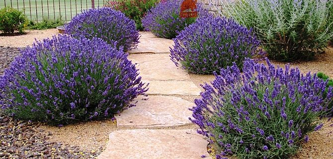 Minneapolis Landscaping Trends - Lavender Landscape Design